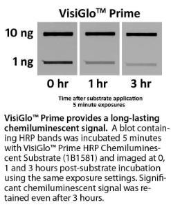 HRP chemiluminescent substrate kits, VisiGlo™