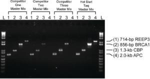 Hot Start <i>Taq</i> PCR Master Mix, 2X